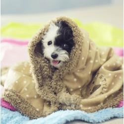 Плед для собаки