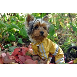 Rain Coat for dog